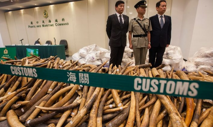 Hong Kong authorities seize 'record' ivory haul