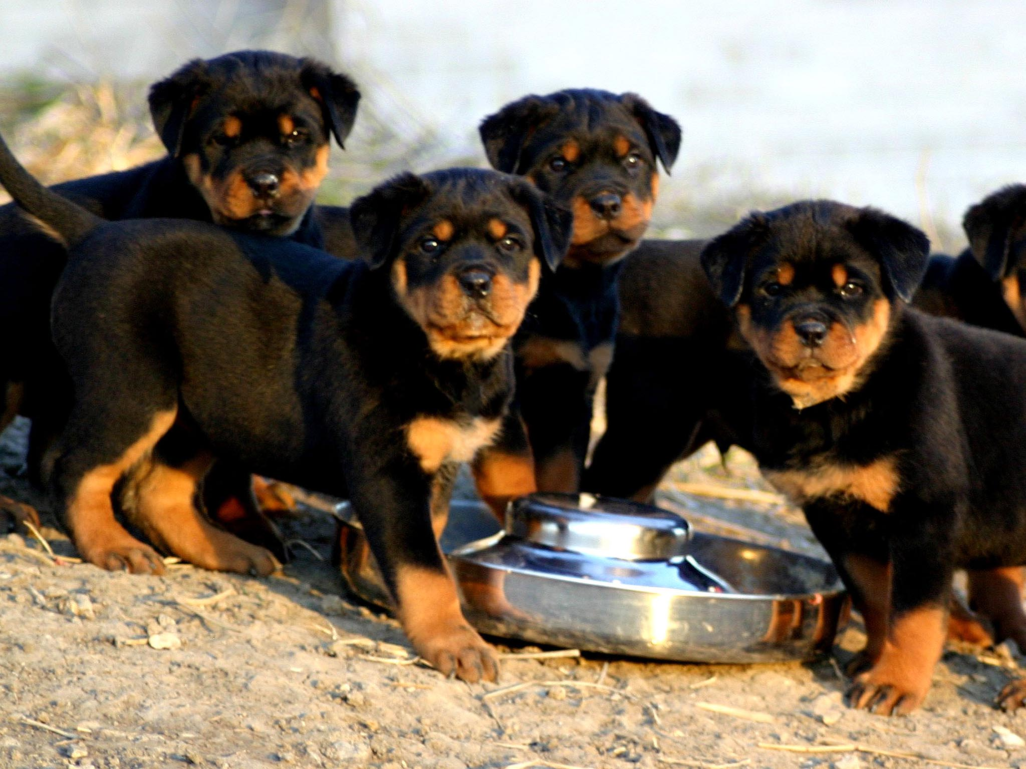 Puppy Feeding – Our Top 10 Tips – Local Vet 2017