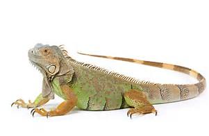 Reptiles - Owning Reptiles